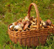 Grzyby w Polsce: kiedy i jak zbierać borowiki, kurki, a kiedy maślaki?